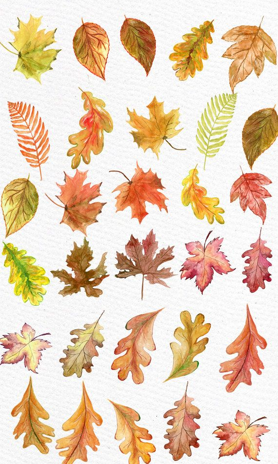 Watercolor leaves fall clipart freeuse download Watercolor Leaves Clipart: \