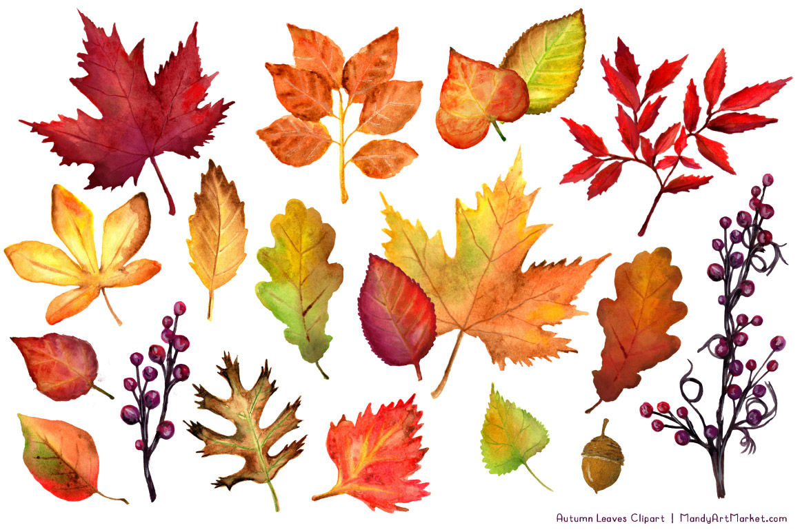 Watercolor leaves fall clipart vector free download Watercolor Autumn Leaves & Branches Clipart By Amanda Ilkov ... vector free download