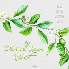 Watercolor lemon wreath free clipart png banner library download Watercolors, Wedding and Clip art on Pinterest banner library download