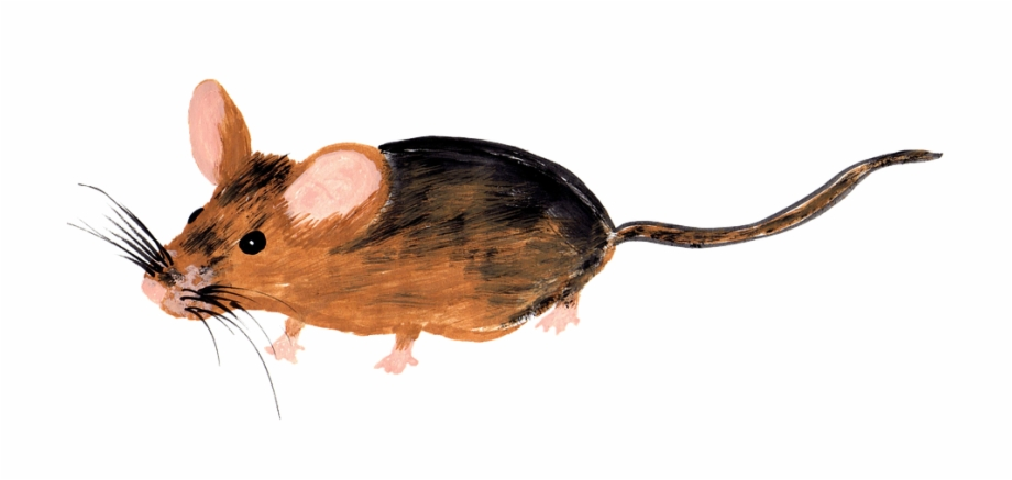 Watercolor mouse clipart clip art free stock Mouse, Watercolor, Isolated, Handpainted, Drawing - Drawing ... clip art free stock