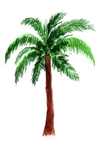 Watercolor palm tree clipart vector stock Palm Tree IN premium clipart - ClipartLogo.com vector stock