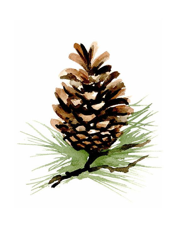 Watercolor pine cones clipart picture black and white Collection of 14 free Watercolor clipart pinecone bill ... picture black and white