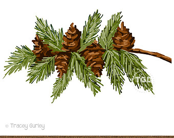Watercolor pine cones clipart free library Watercolor Pine Branch at PaintingValley.com | Explore ... free library