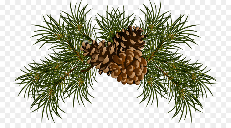 Watercolor pine cones clipart png stock Christmas Tree Branch png download - 800*483 - Free ... png stock