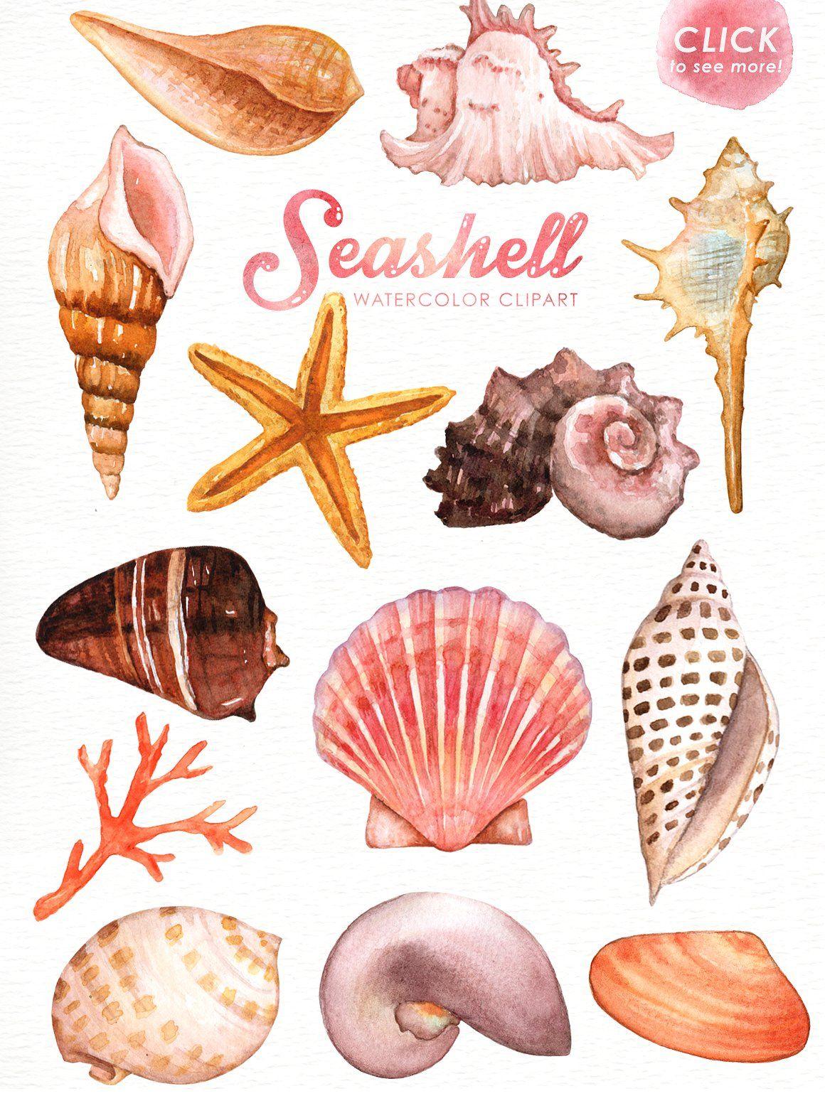 Watercolor seashell clipart