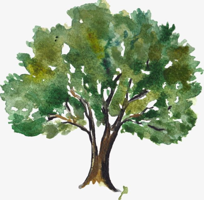 Watercolor trees free clipart jpg freeuse download Green Watercolor Trees PNG, Clipart, Backgr, Botany, Branch ... jpg freeuse download