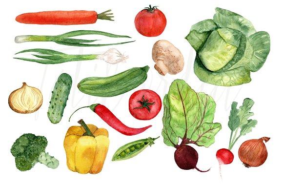 Watercolor veggie clipart jpg royalty free 17 Watercolor Vegetables Clip Art jpg royalty free