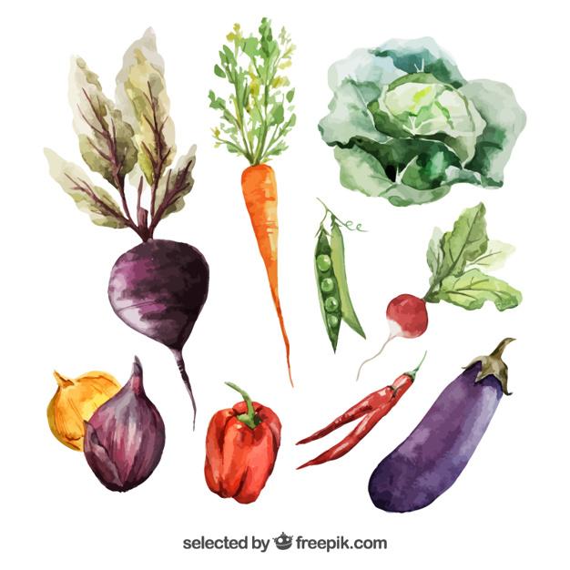 Watercolor veggie clipart clip transparent download Watercolor vegetables Vector | Free Download clip transparent download