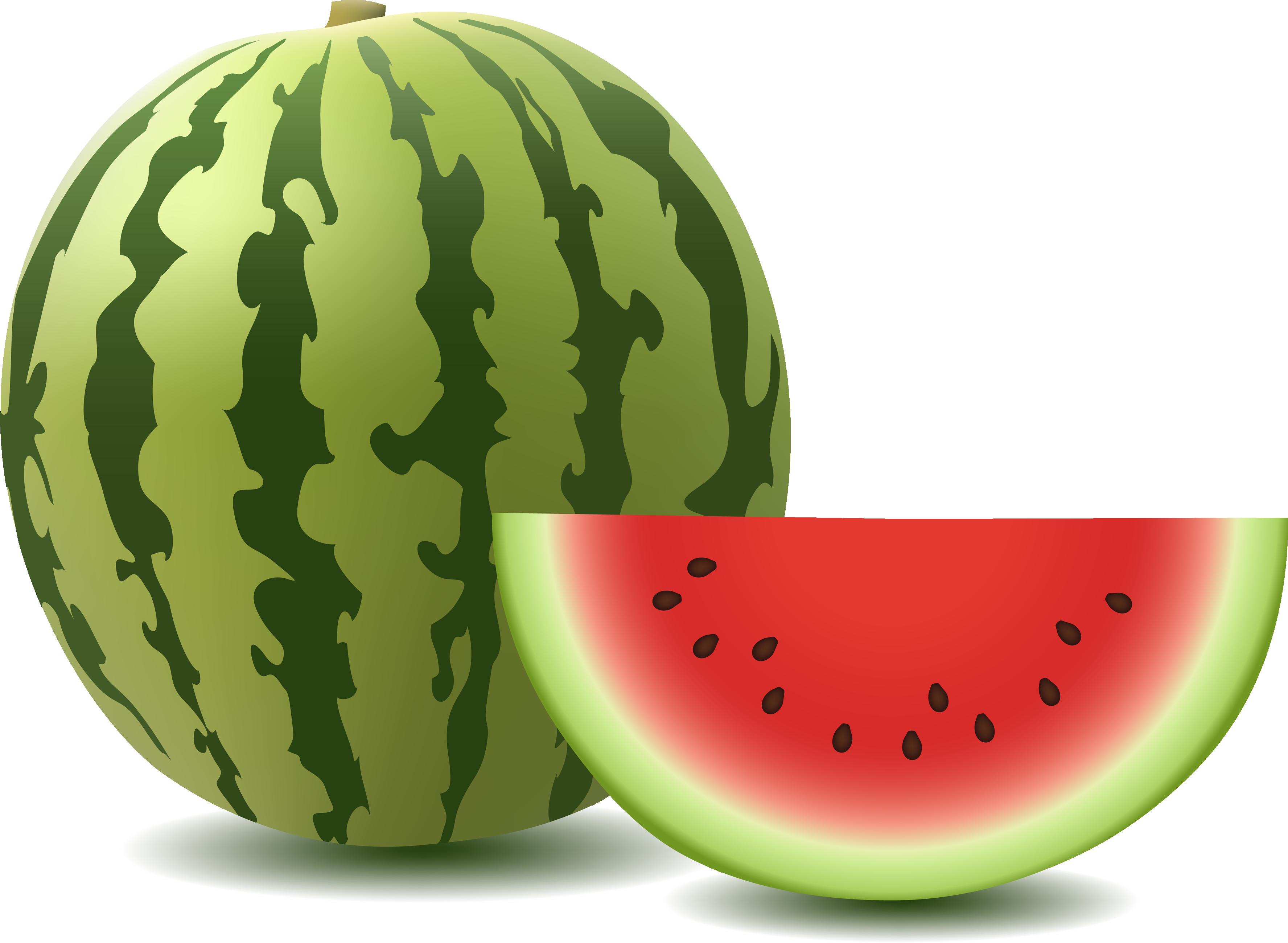 Watermelon xigua clipart clip art freeuse download Melon,Watermelon,Citrullus,Cucumber, gourd, and melon family ... clip art freeuse download