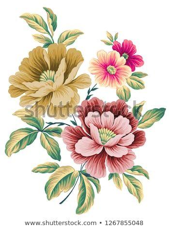 Waxflower watercolor clipart