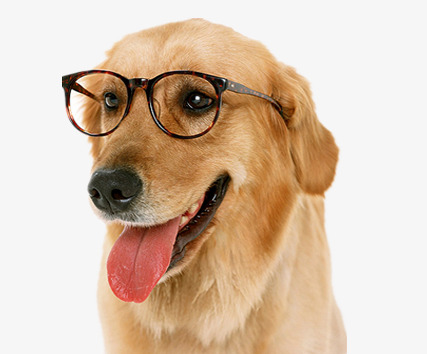 Wear glasses clipart png free download Dog With Glasses Material, Dog Clipart, #66658 - PNG Images ... png free download