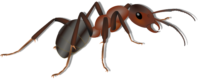 Weaver ant clipart clip freeuse Ant PNG Transparent Images | PNG All clip freeuse
