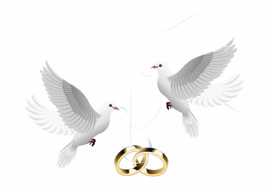 Wedding rings and dovees clipart png black and white Ring Vector Marriage Wedding Download Hd Png Clipart ... png black and white