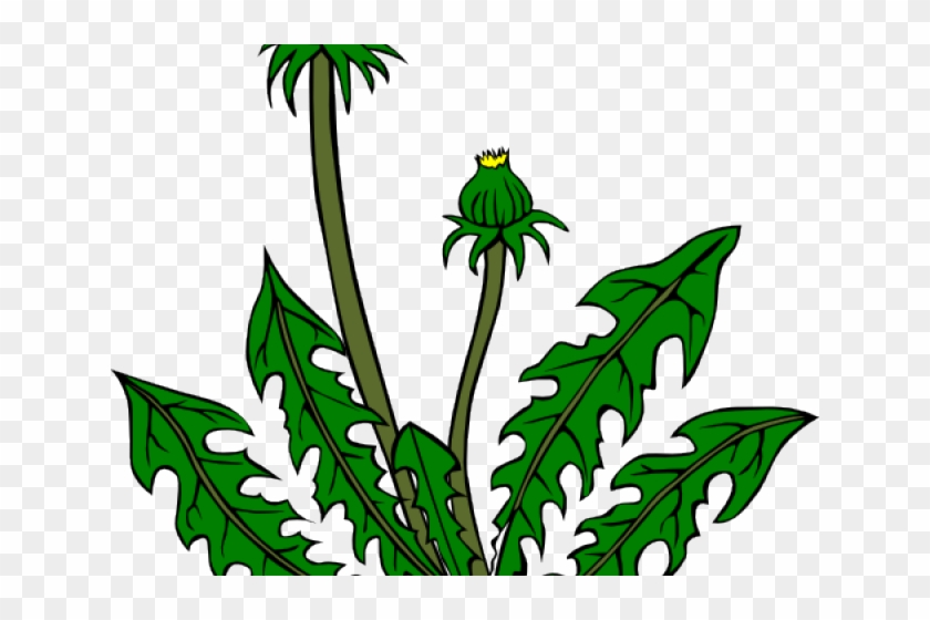 Weed cliparts clipart transparent stock Weed Joint Cliparts Free Download Clip Art - Dandelion Clip ... clipart transparent stock