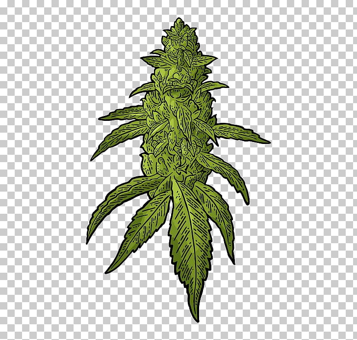 Weed cliparts svg transparent Drawing Cannabis Hemp, cannabis, green leafed plant ... svg transparent