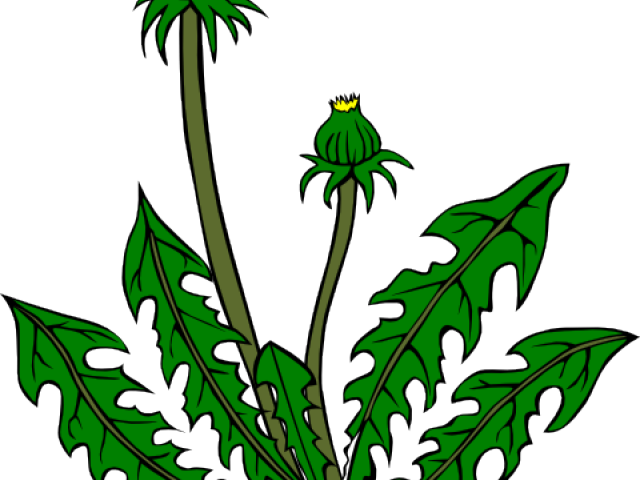 Weed flower clipart picture freeuse library Weed Joint Cliparts Free Download Clip Art - carwad.net picture freeuse library