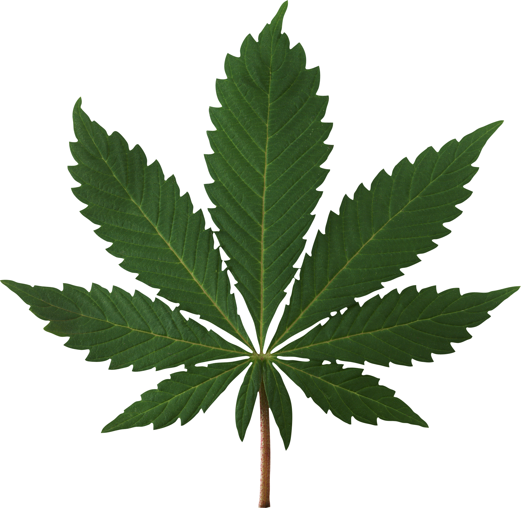 Weed flower clipart jpg library Cannabis Leaf PNG Image - PurePNG | Free transparent CC0 PNG Image ... jpg library
