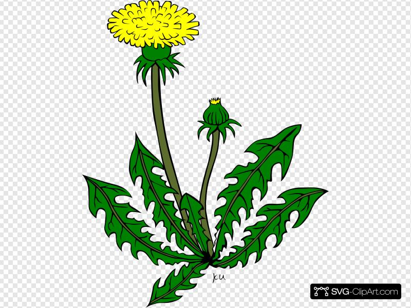 Weed images clipart graphic transparent stock Dandelion Weed Clip art, Icon and SVG - SVG Clipart graphic transparent stock