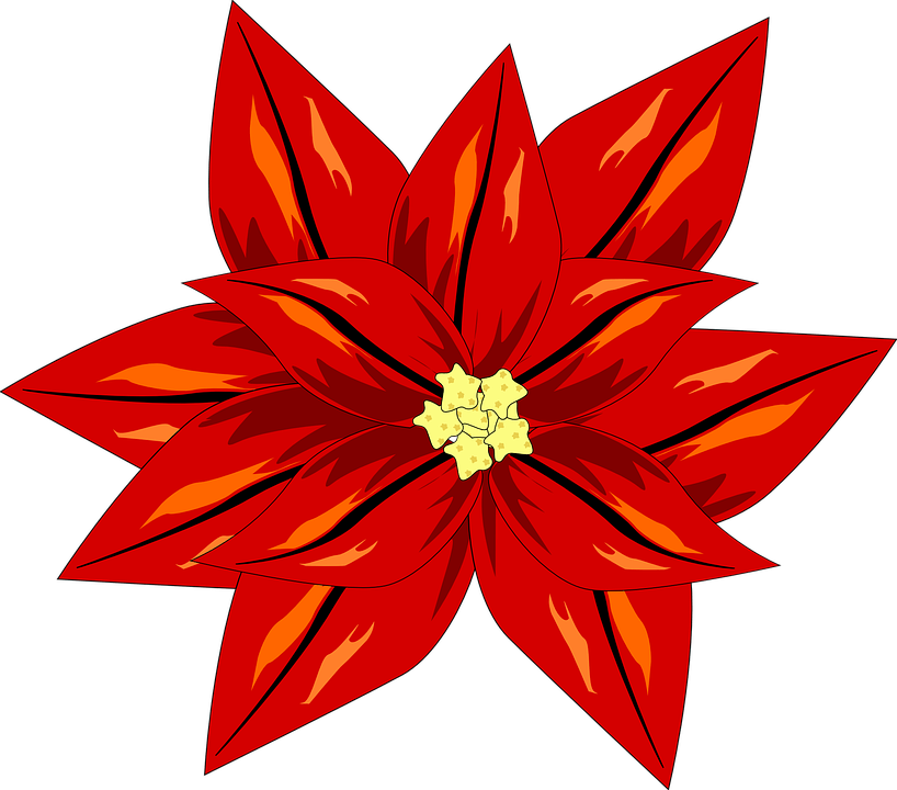 Weihnachtsstern clipart png free library Weihnachtsstern pflanze clipart » Clipart Portal png free library