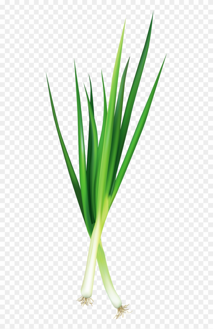 Welsh onion clipart picture library stock Фотки Vegetable Pictures, Food Stickers, Green Onions ... picture library stock