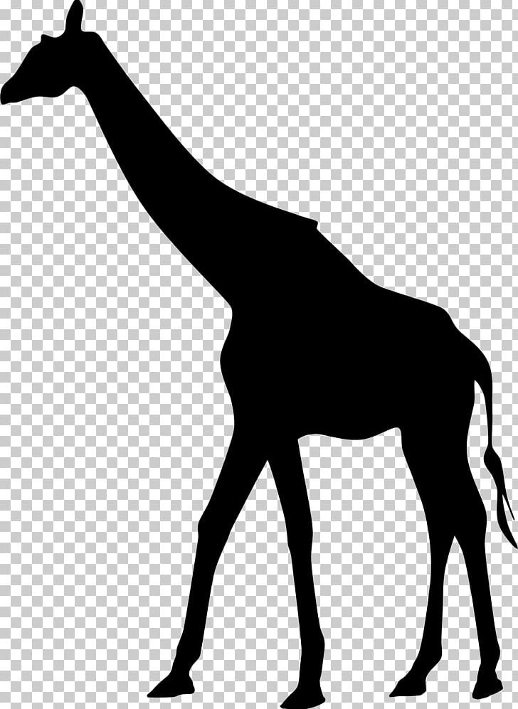 West african clipart freeuse Northern Giraffe West African Giraffe Silhouette PNG ... freeuse