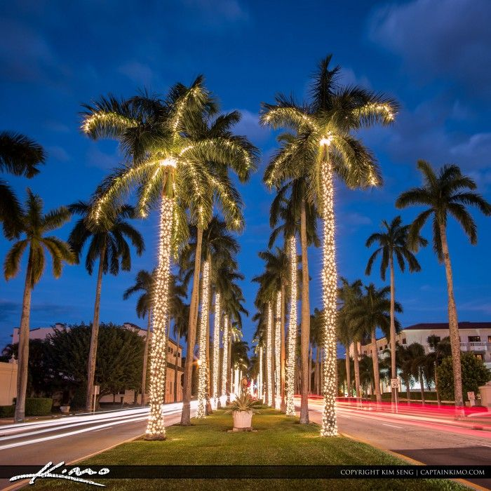 West palm beach clipart clip stock Christmas lights on palm trees along the road on Palm Beach ... clip stock