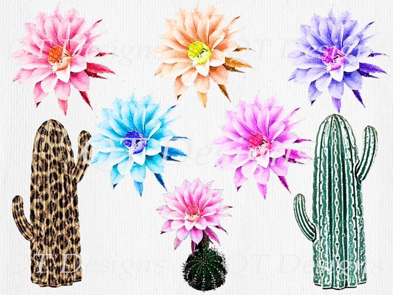 Western floral clipart image transparent BOHO Western Clipart Pack Leopard print cactus green print ... image transparent