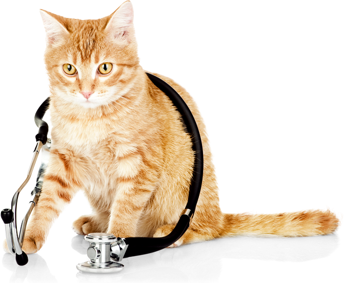 Wet cat clipart jpg free stock Wet Cat PNG Transparent Wet Cat.PNG Images. | PlusPNG jpg free stock