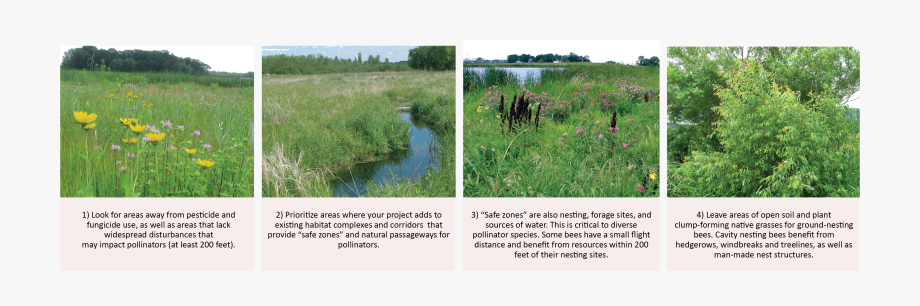 Wetland habitat clipart banner freeuse library Key Considerations For Locating Pollinator Habitat ... banner freeuse library