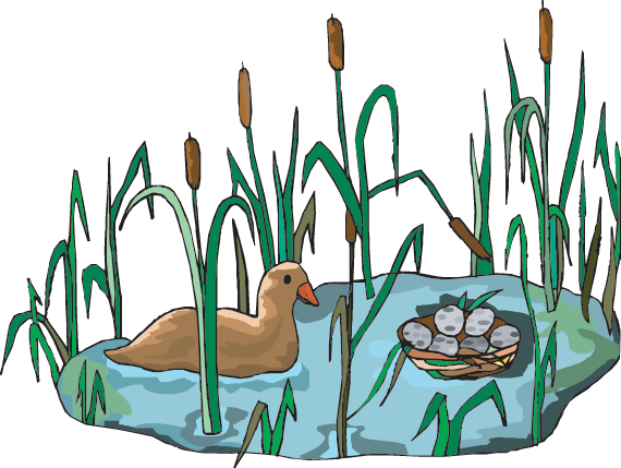 Wetland habitat clipart svg free download Wetlands: Resources (Science Trek: Idaho Public Television) svg free download
