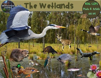 Wetland habitat clipart png black and white download Wetlands Animals Clip Art Habitat Biome Real Clips Photo & Artistic png black and white download