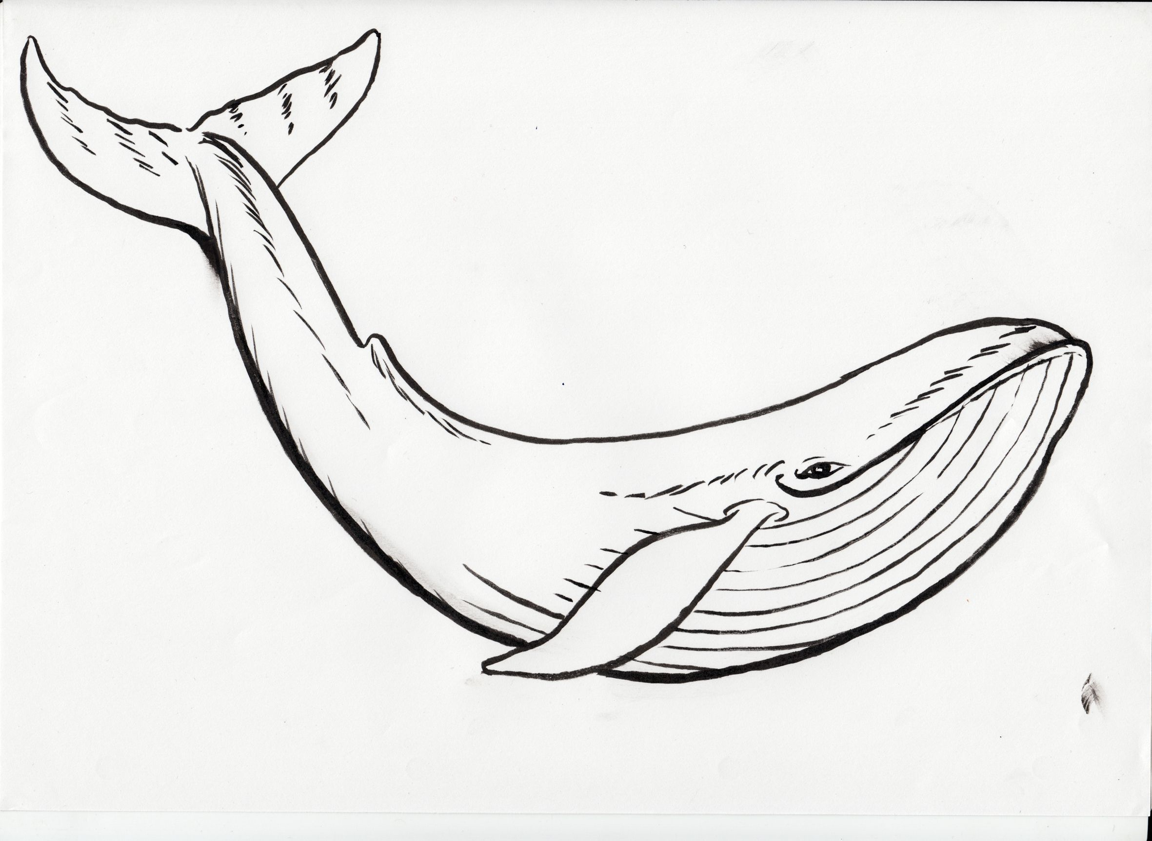 Whale clipart line drawing clip art download Humpback Whale Black Clipart Humpback Whale Coloring Page In ... clip art download