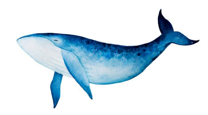 Whale pictures clipart graphic transparent stock free clipart humpback whale | www.thelockinmovie.com graphic transparent stock