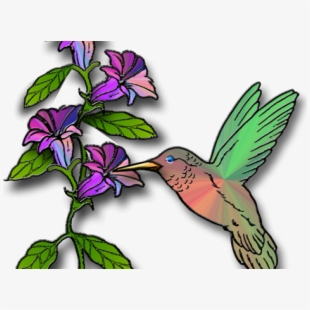What flower does a hummingbird like clipart banner transparent download Free Hummingbird Clipart Cliparts, Silhouettes, Cartoons ... banner transparent download