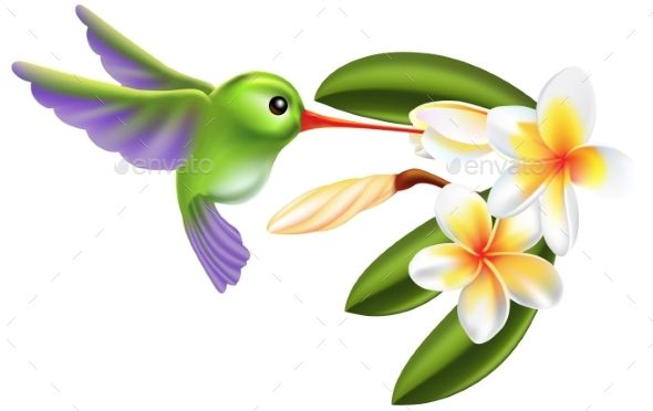 What flower does a hummingbird like clipart clipart transparent Illustration of a humming bird and flowers | Flyer Template ... clipart transparent