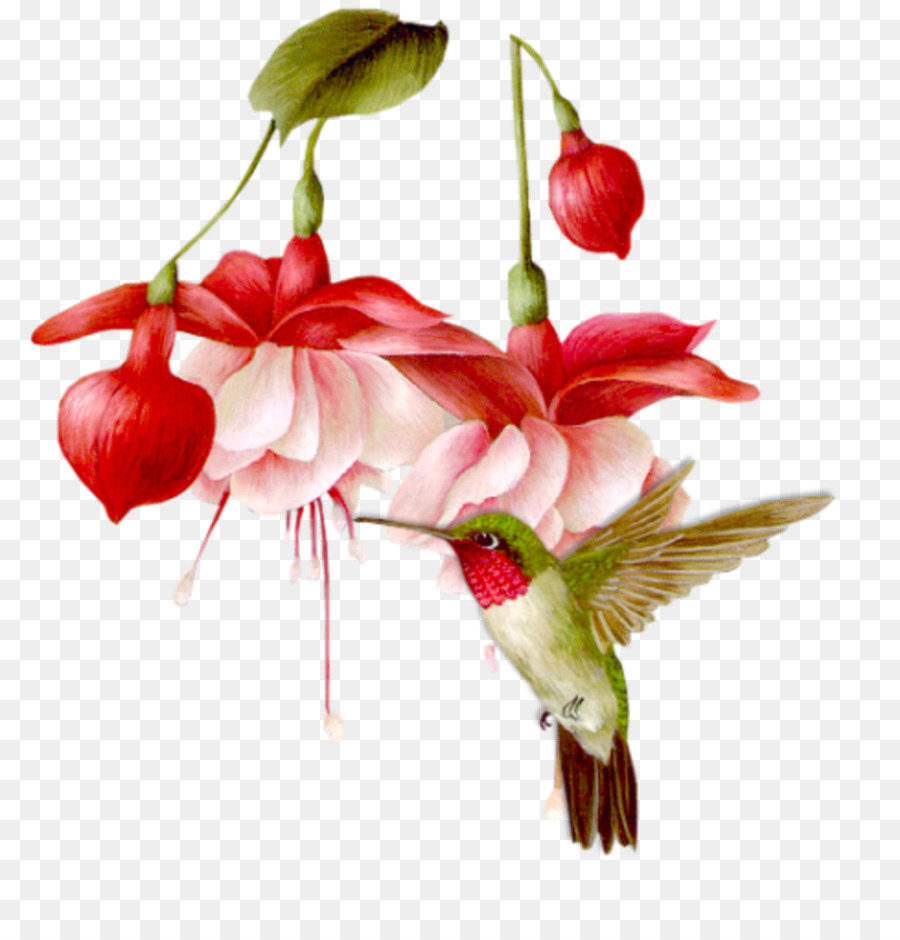 What flower does a hummingbird like clipart image freeuse Flowers Clipart Background png download - 977*999 - Free ... image freeuse