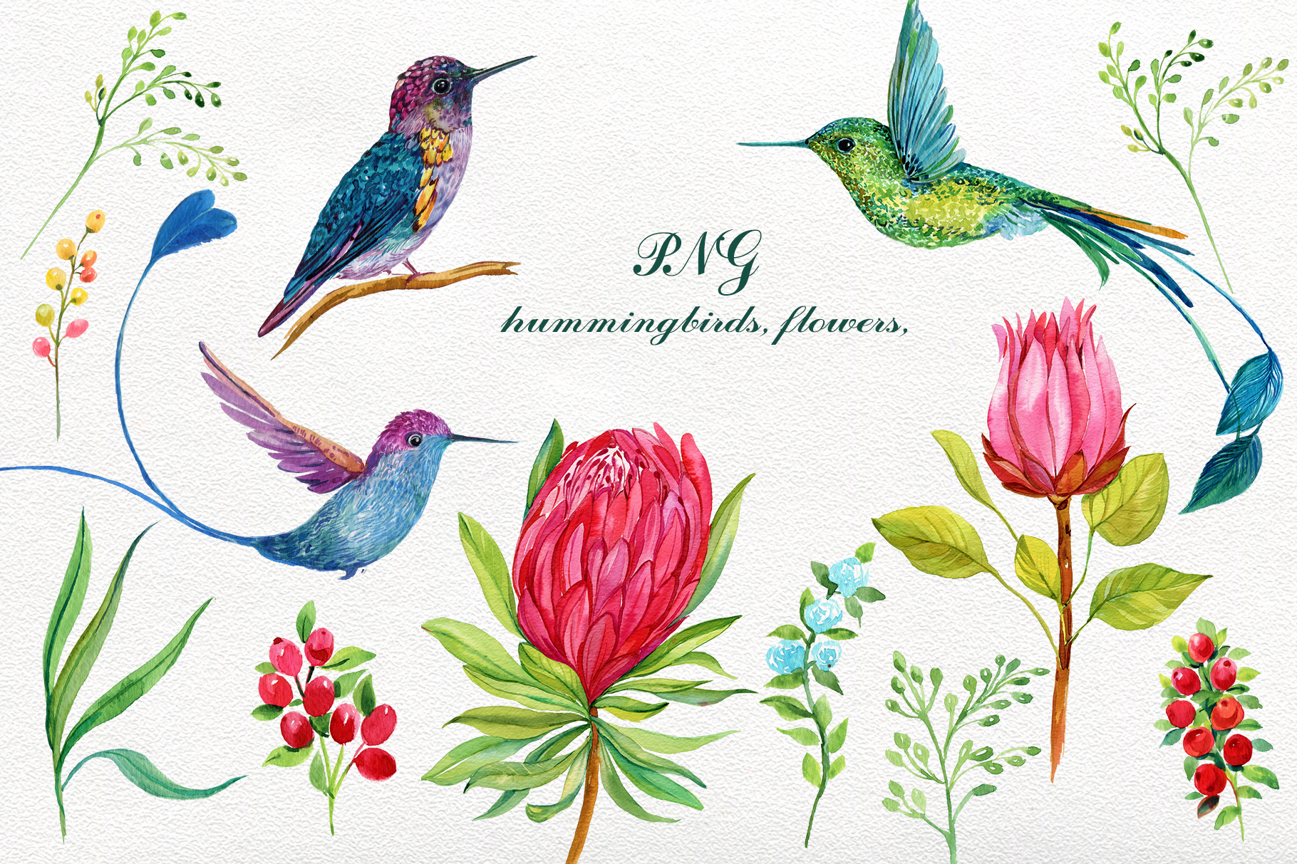 Hummingbird with flower clipart clip transparent download Hummingbirds Exotic Flowers Clipart clip transparent download