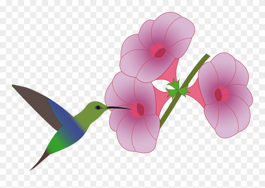 Hummingbird with flower clipart vector royalty free download Big Image - Hummingbirds And Flowers Clipart - Png Download ... vector royalty free download