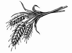 Wheat bundle clipart svg royalty free stock Image result for black and white wheat bundle clipart ... svg royalty free stock