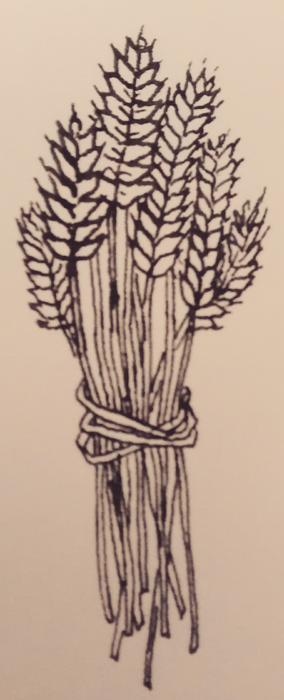 Wheat bundle clipart image download wheat sheaf clipart | Clipart Panda - Free Clipart Images image download