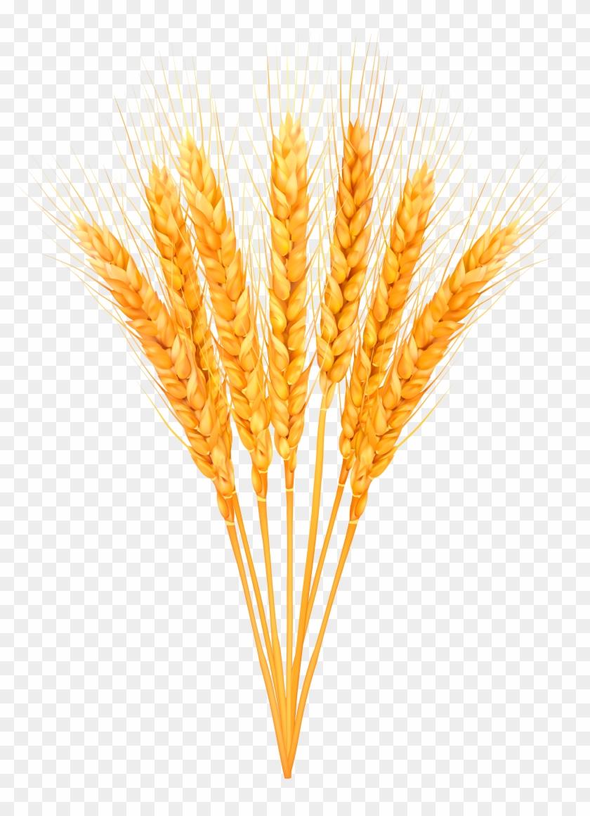 Wheat bundle clipart