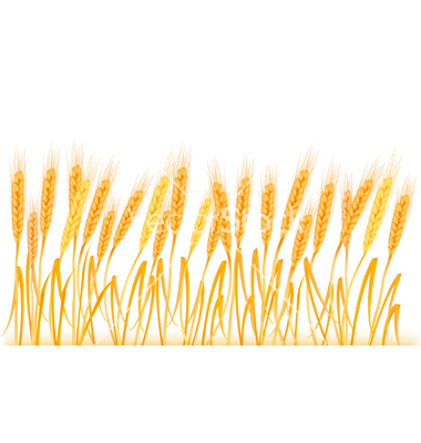 Wheat frame clipart png freeuse Free Wheat Border Cliparts, Download Free Clip Art, Free ... png freeuse