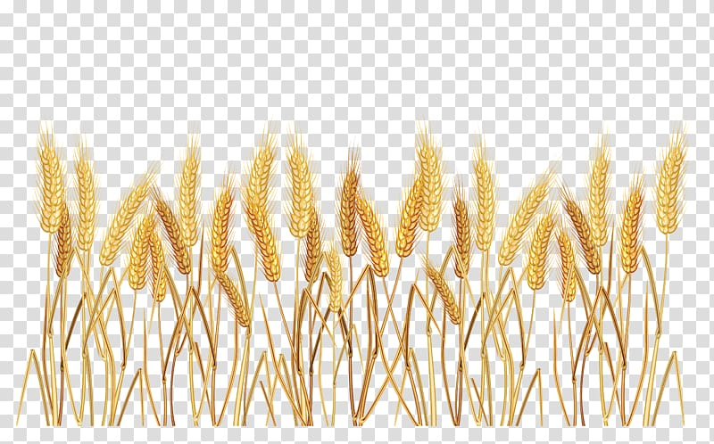 Wheat frame clipart svg black and white stock Brown wheat illustration, Common wheat Cereal , Wheat Border ... svg black and white stock