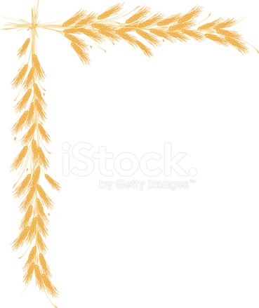 Wheat clipart border picture free stock Wheat Border Stock Vector - FreeImages.com picture free stock