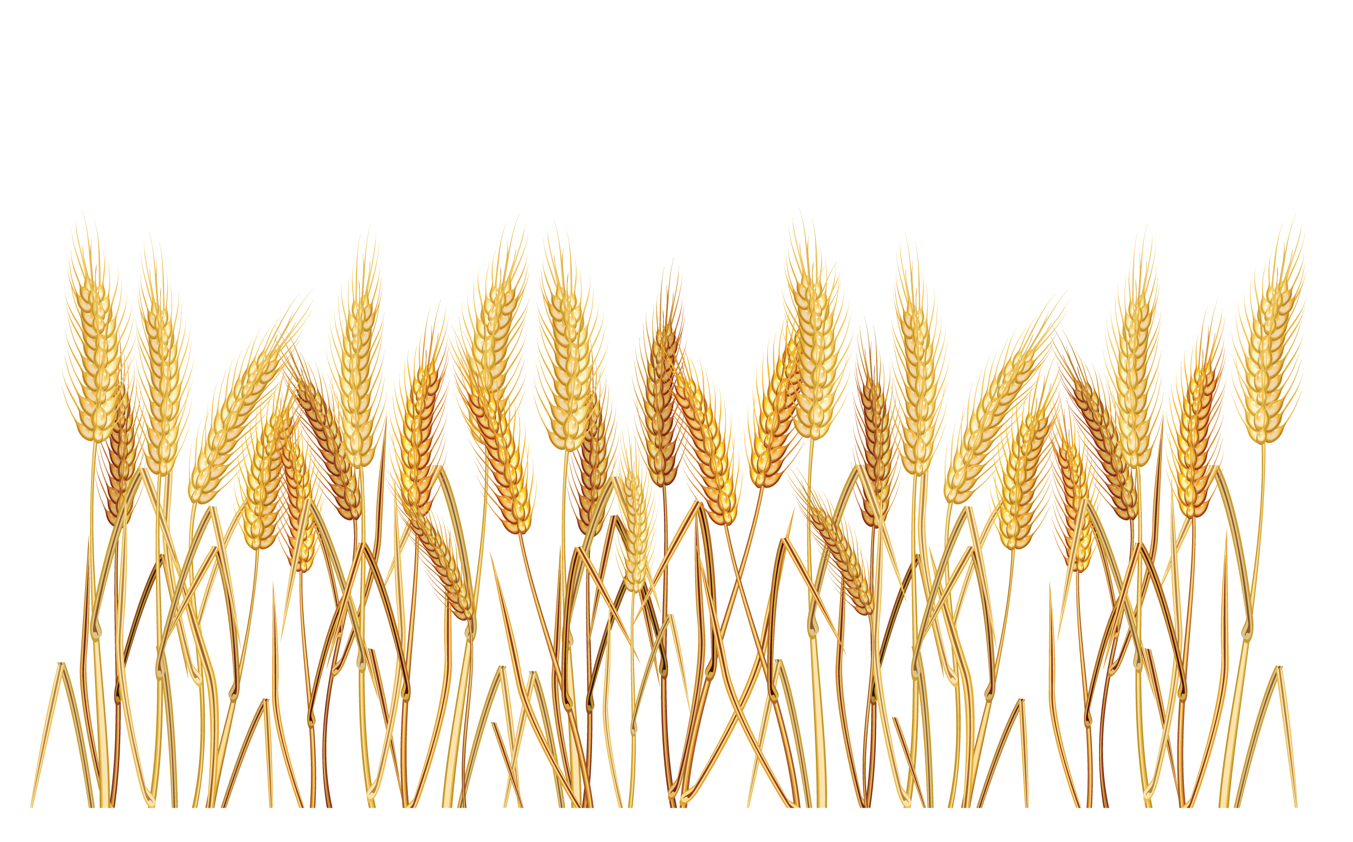 Wheat clipart border png library library Free Wheat Border Cliparts, Download Free Clip Art, Free ... png library library