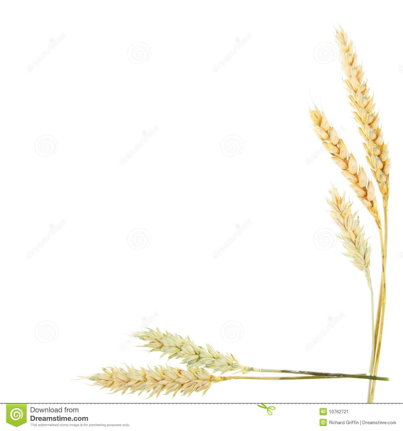 Wheat clipart border vector black and white download Wheat border clipart 4 » Clipart Portal vector black and white download