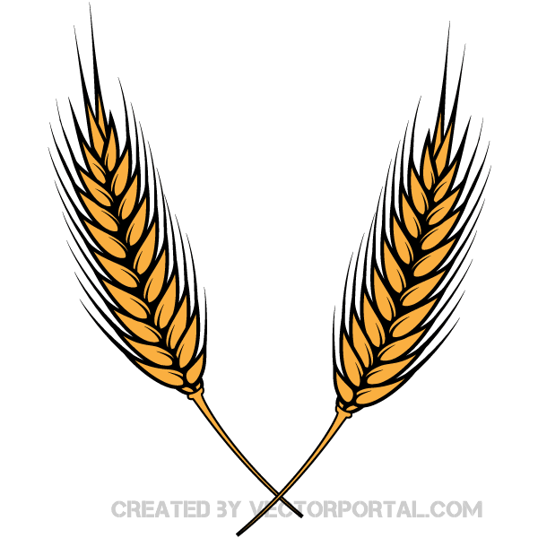 Wheat clipart vector jpg library Wheat Vector Image | Download Free Vector Art | Free-Vectors jpg library