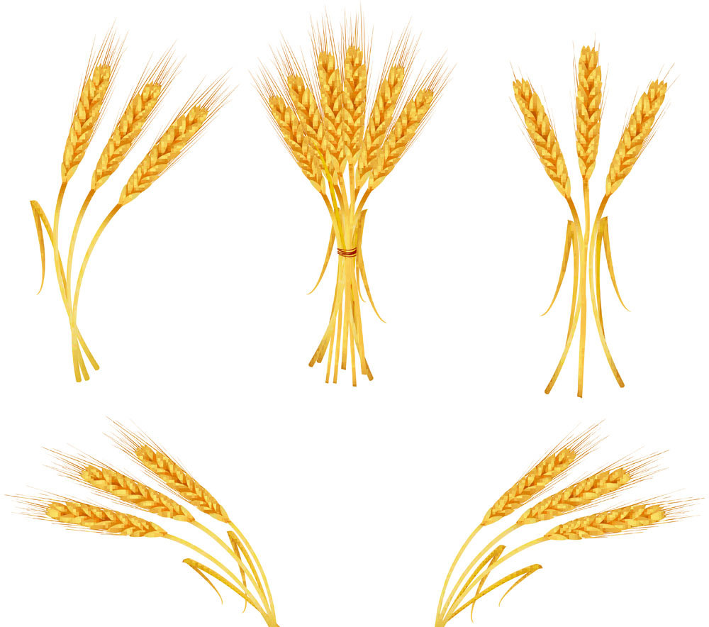 Wheat clipart vector royalty free Free Free Wheat Vector, Download Free Clip Art, Free Clip ... royalty free