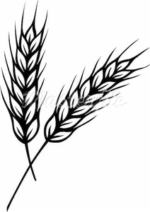 Wheat clipart vector