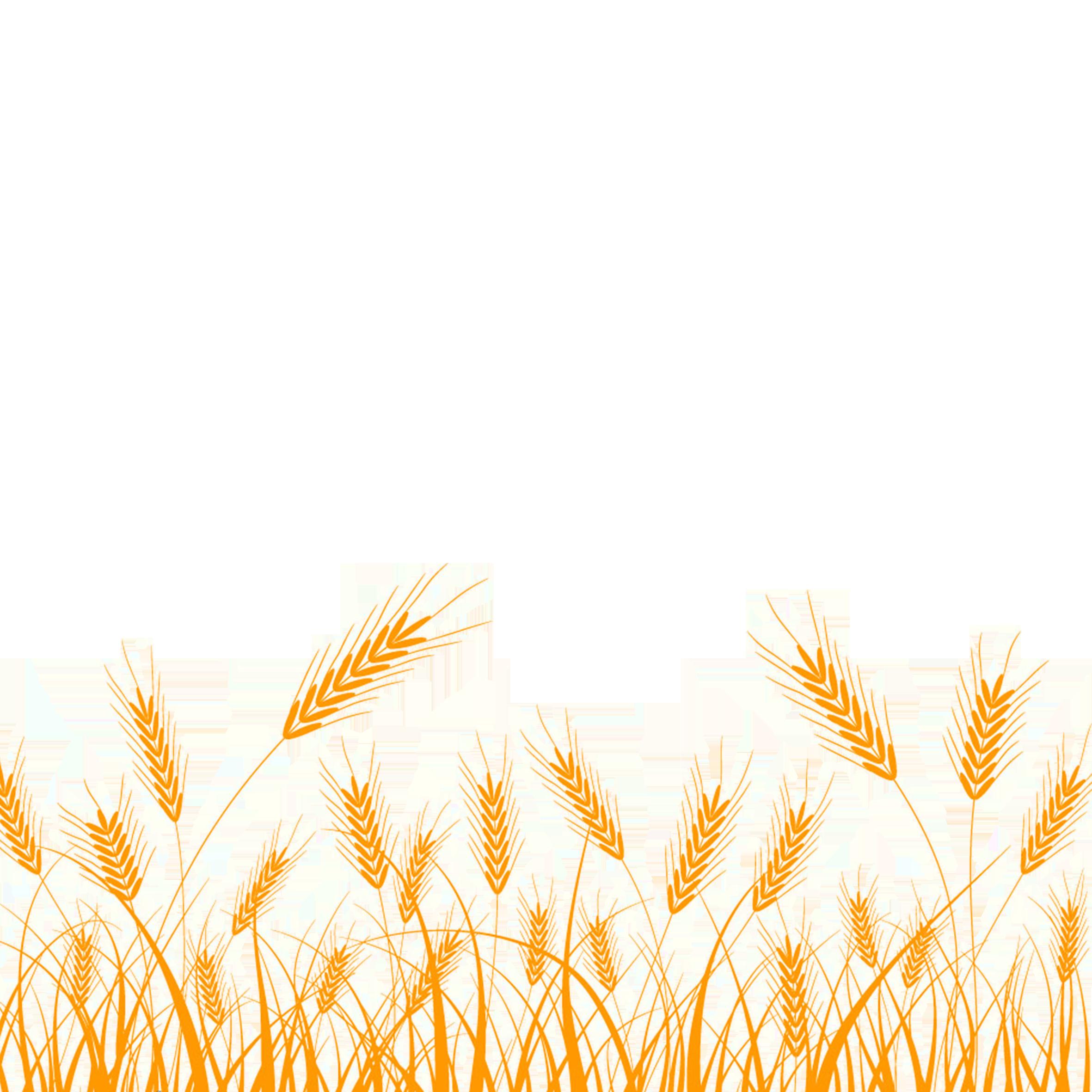 Wheat field silhouette clipart graphic Wheat Silhouette Clip art - Rice png download - 2362*2362 ... graphic